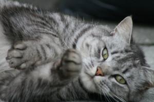 catchy kattenvachtverzorging